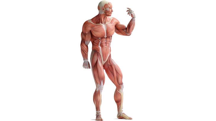 筋骨格モデルの必要性